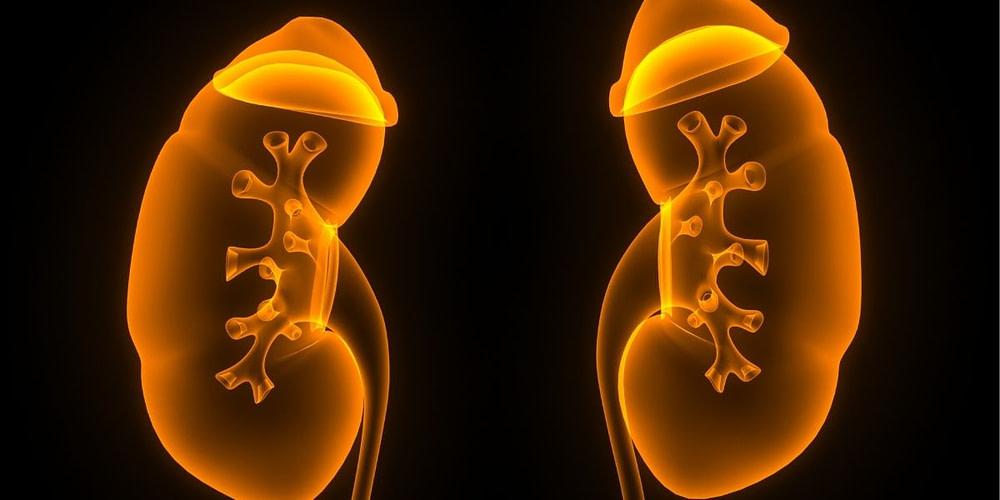 creatine slecht voor nieren