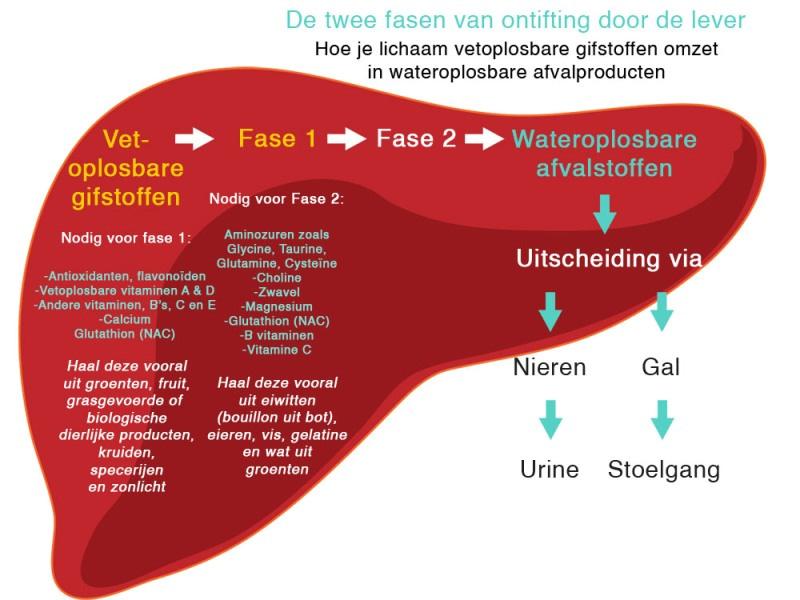 wat-is-detoxen-precies-lever