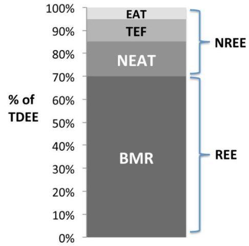 energiebalans lichaam