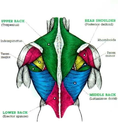pull up spieren