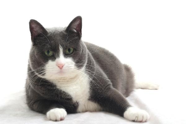 BMI kat