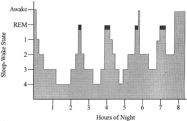 slaap cyclus