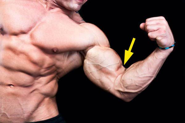 biceps spierbuik grootte genetische potentie