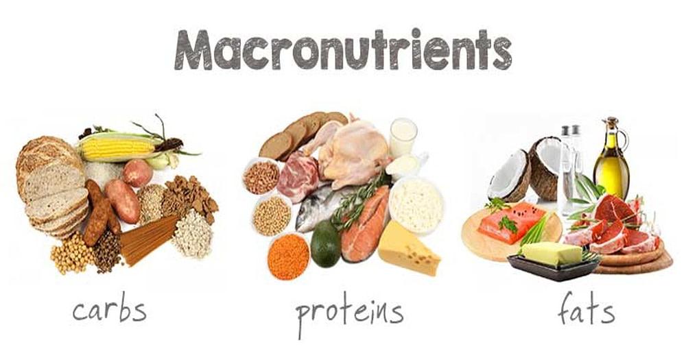 macronutrienten verhouding