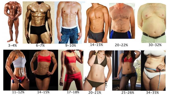 lichaamsvetpercentages gemiddeld